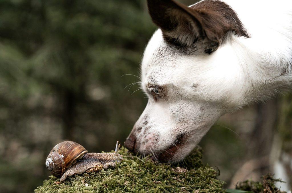 Dog looking at snail