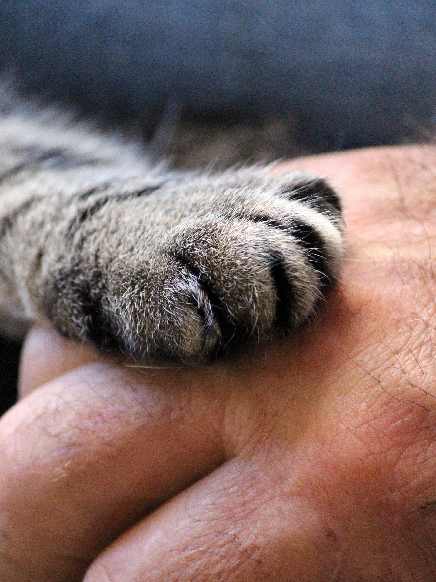 Cat paw on hand