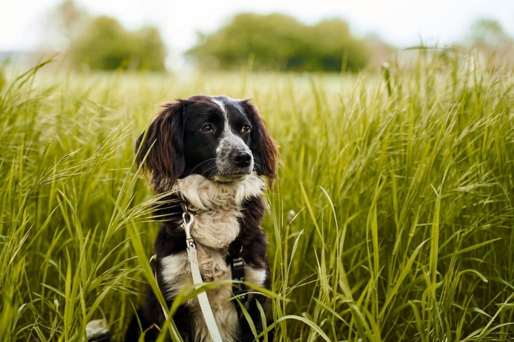 Dog in long grass