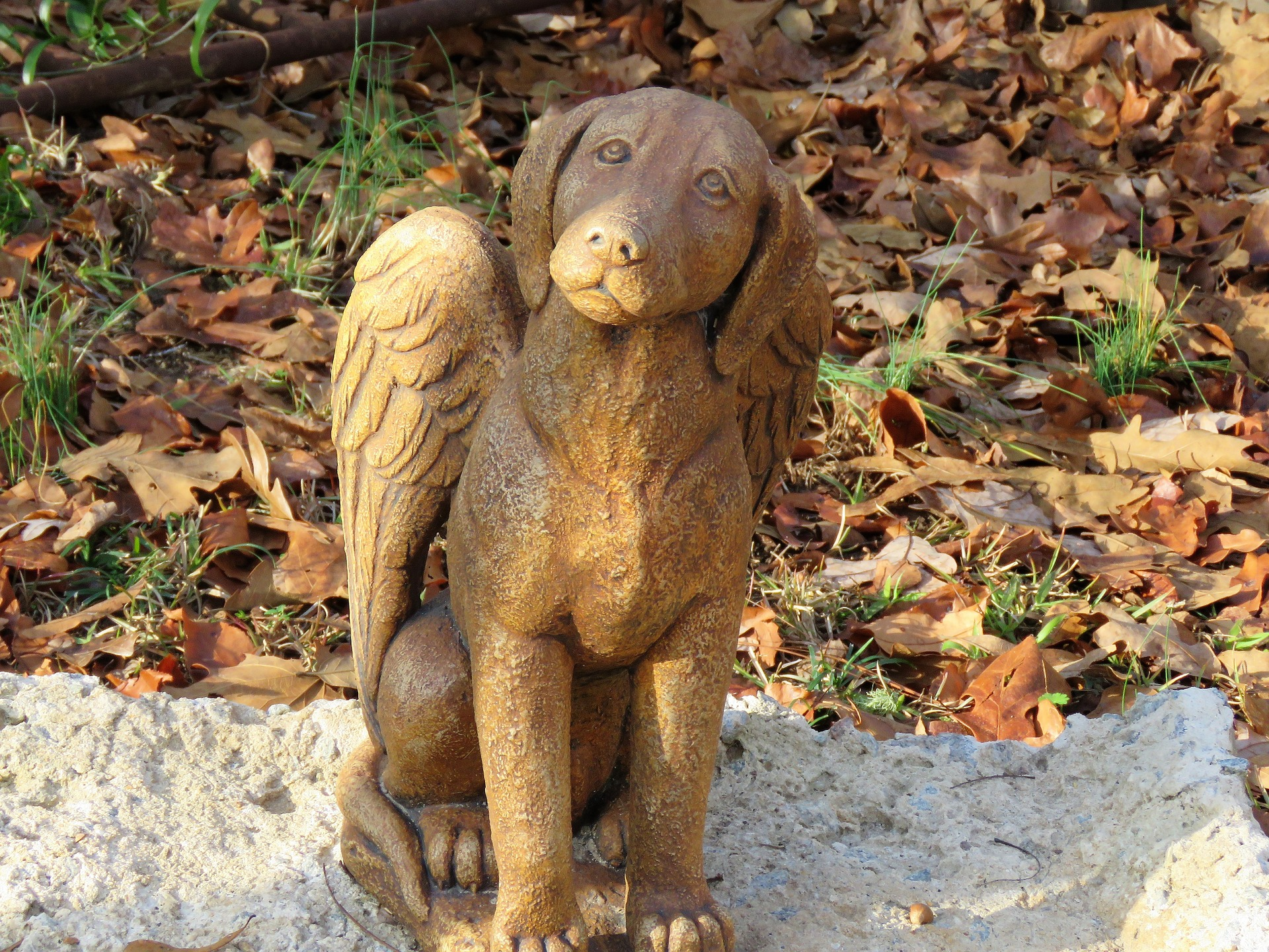 Angel dog statue