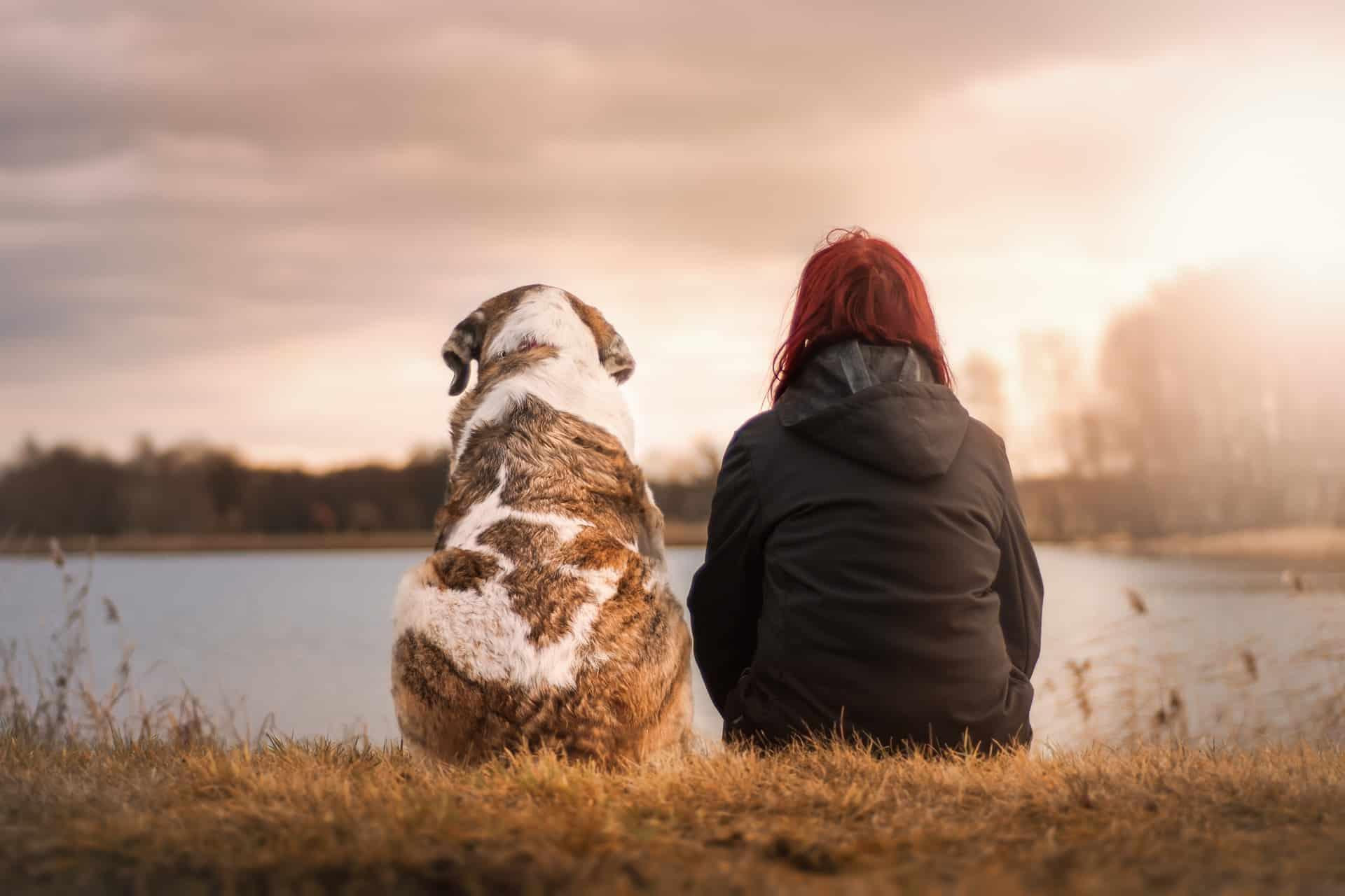Dog and human sitting staring into distance