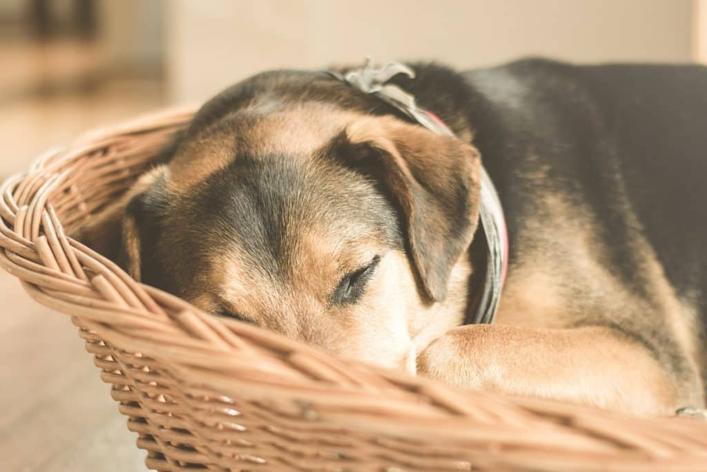 Dog sleeping in basket
