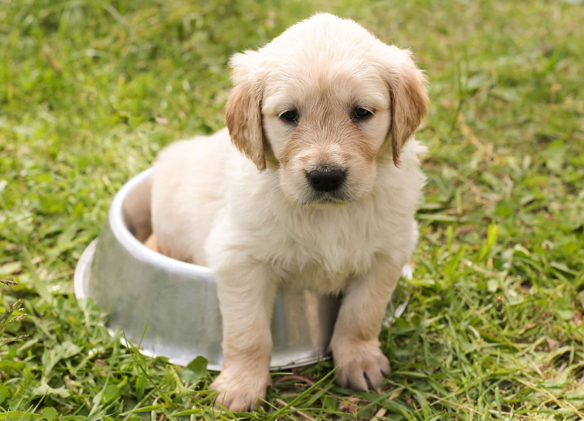 Puppy sitting in food bowl