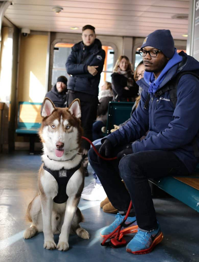 Husky sitting nicely in crowded area