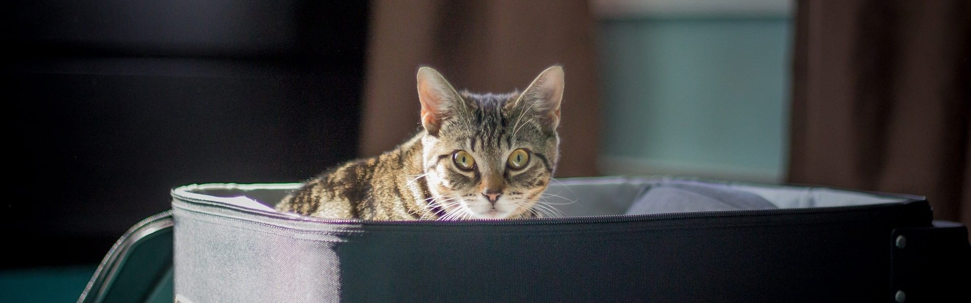 Cat sitting in suitcase