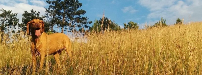 dog_long_grass (2)_long