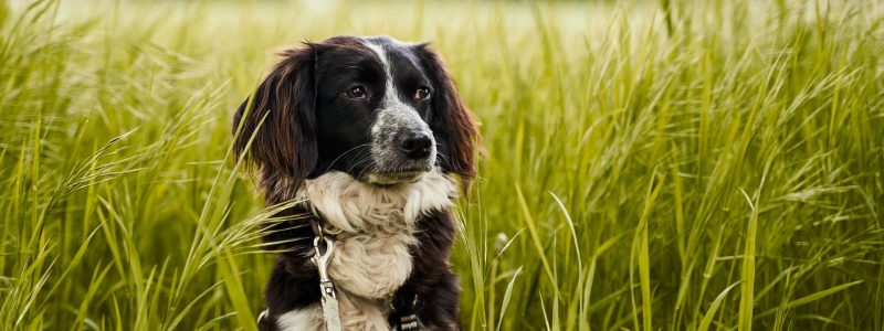 Dog in long grass
