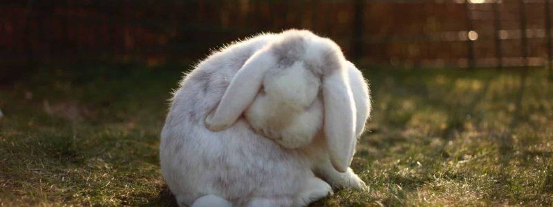 rabbit_grooming
