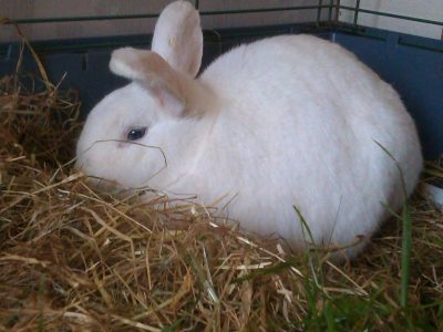 rabbit_hay